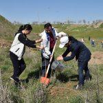 Шымкентте «Шатқал» бағдарламасы бойынша 226 гектарға ағаш көшеттері отырғызылады