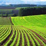 364,4 мың гектар жер мемлекет меншігіне қайтарылды