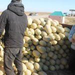 Арыстықтар 56 мың тонна өнімдерін жөнелтті