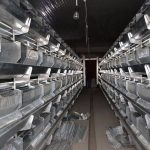 Оңтүстікте жыл соңында 200 тонна құс етін өндіретін кәсіпорын іске қосылады
