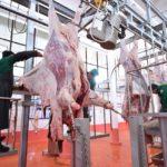 Оңтүстік Қазақстан облысының сапалы ет экспорттау әлеуеті артып келеді