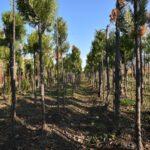 ОҚО-да «Шатқал» бағдарламасы аясында 1 млн 990 мың түп көшетті тегін тарату  жоспарлануда