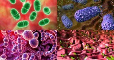йналамыздағы сан-санақсыз вирустар мен бактериялар туралы