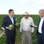 ОҚО-да диқандар 51 мың гектарға қауын-қарбыз еккен