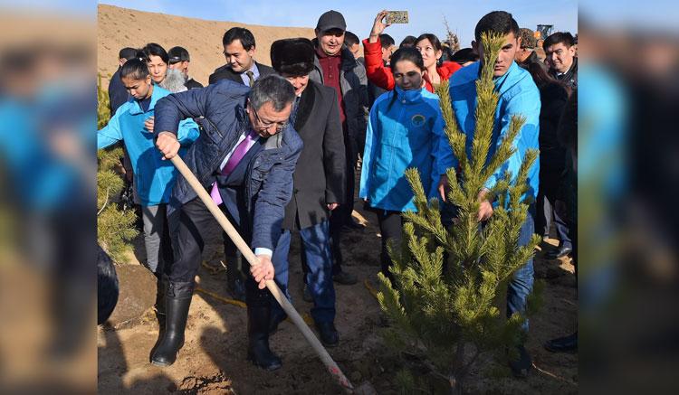 Шымкенттегі «Самал» шатқалына 5 мың түп ағаш отырғызылды